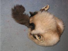 49 Cats In Strange Poses