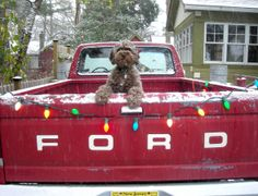 A dog & an old truck - the best!