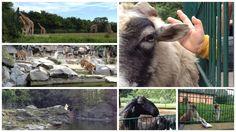 TIERPARK BERLIN - Für die Kleinen ist ein Besuch im Tierpark immer ein großes Abenteuer. Neben den großen Tigern, Elefanten und Affen finden die meisten Kinder den Spielplatz und den Streichelzoo am tollsten. Das geht uns Erwachsenen meist nicht so, dem Zauber der Tiere können wir uns aber auch nicht entziehen.