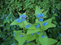 culpeper herbs flax - Google Search