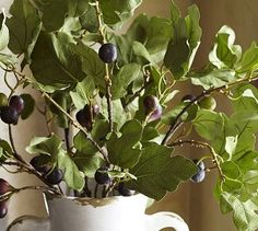 Fig branches | PB