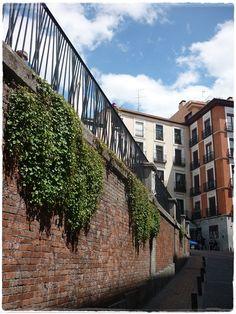 Spontaneous 'vertical garden'. Marqués de Santa Ana Street, Malasaña Santa Ana, Where The Heart Is, Places To See, Stairs, Sky, Vertical Gardens, Events, Heaven, Stairway