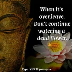 When it's over leave don't continue watering a dead flower