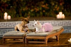 Beverly Hills Chihuahua!  Love that movie