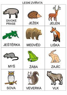 Lesní zvířata