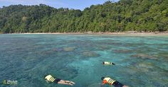 Tourists snorkeling in clear water beautiful sea like a heaven at Surin island, Phang-nga Thailand Beaches In Phuket, Snorkelling, Turquoise Water, Hotels And Resorts, The Locals, Thailand, Surfing, Heaven, Sea