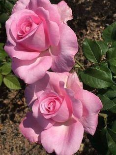 Tattoo rose pink mom 41 new ideas