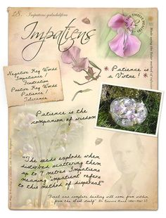 Impatiens Bach Flower Poster                              …