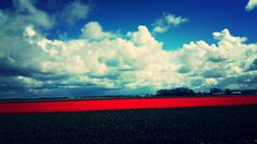 Red flowers sky