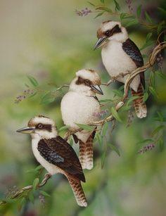 Specializing in Wildlife, Birds, Ballarat Victoria Australia Birds 2, Victoria Australia, Bird Art, Wildlife, Artist, Animals, Photos, Drawings, Animales