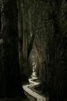 28 Ideas for nature forest dark paths Beautiful World, Beautiful Places, Winding Road, Pathways, Belle Photo, White Photography, Travel Photography, Ocean Photography, Photography Women