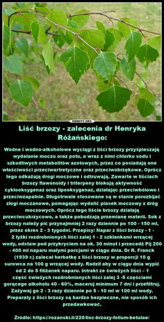 Simple Syrup, Geraniums, Herbalism, Remedies, Survival, Hair Beauty, Healing, Herbs, Homemade