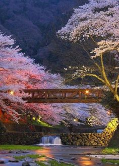 Japan Travel Inspiration - Cherry blossoms in Kyoto, Japan