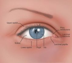 Image result for main lacrimal gland opthalmology pinterest the simple eye test to tell if your adrenals are fatigued and what to do immediately if they are ccuart Images