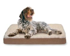 Large Dog Bed Orthopedic Pet Pillow Plush Cover Puppy Foam Cushion Sofa Mattress #FurhavenPet