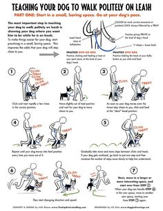 Loose Leash Walking- part 1 by Lili Chin, via Flickr