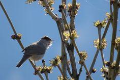 Primavera a Salbertrand  #myValsusa 08.04.17 #fotodelgiorno di Maria Rita Brun