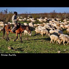 Rezonland: Opowieści z Gruzji cz. V, Kvemo Kartli *Bolnisi, M...