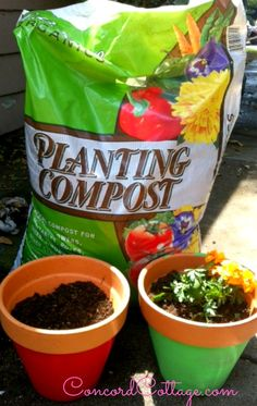 How to Paint $1 Flower Pots and Add Color to Your Backyard