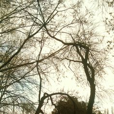 Today it is. #today #it #is #itis #wood #sky #snarl #crossing #branches #cold #dry #trees #wunderkammer #arsenalepiu