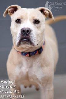 Dogs For Adoption Euthanization Rescue Sponsor Dog Adoption Dog List Animal Shelter