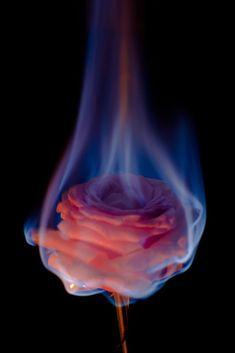 flowers on fire - Google zoeken