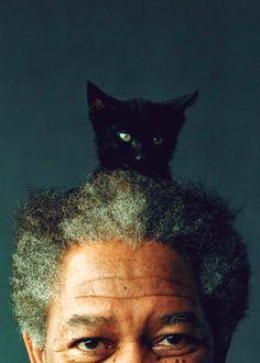 sublingually: kitty freeman