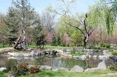 Gradina japoneza parcul Regele Mihai I Painting, Painting Art, Paintings, Painted Canvas, Drawings