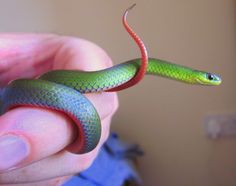 ground snake care - Bing Images