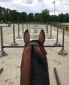 - Horse - Obsessed 😍 Another grid goals thanks to Who else loves tr. Obsessed 😍 Another grid goals thanks to Who else loves training show jumping grids? Pretty Horses, Horse Love, Horse Girl, Beautiful Horses, Cavalo Wallpaper, Horse Exercises, Horse Riding Tips, Equestrian Outfits, Horse Training