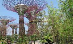 #9 [DAY3-PAGI] Garden by The Bay! liat yang ijo-ijo dulu gan biar seger. lumayan buat ngilangin hangover party semalam, hehe.. jalan2 pagi sambil nambah oksigen di paru-paru. selain liat pohon beneran, kita mau liat pohon solar. namanya pohon solar karena dirancang utk mengumpulkan air hujan dan energi solar dari matahari, utk konservasi lingkungan. Canggih! Lanjut lunch di Singapore Food Trail, an exciting concept dining brings back the nostalgic feel of Singapore in the 1960s…