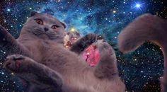 The Best Damn Space Cat!