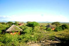 Kilimanjaro, Time Travel, Vineyard, Cabin, House Styles, Outdoor, Home, Decor, Outdoors