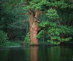 Oak Flooded by River - Wall Mural & Photo Wallpaper - Photowall