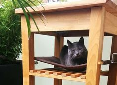 That's one lucky cat. This cat bed was made by hanging fabric squares above the shelf of an IKEA bar cart.