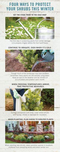 Have a plan in place when cold temperatures arrive. Here are four ways to protect your garden this winter. Forest Garden, Autumn Garden, Lawn And Garden, Farm Gardens, Outdoor Gardens, Vegetable Garden Tips, Exterior Makeover, Garden Care, Lawn Care