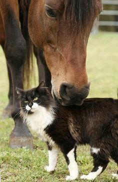 Contempt for Cats - TheHorse.com | How do you correct a misbehaving horse that hates cats? #horses #horsebehavior #cats