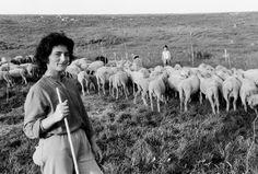 Norcia, anni 80. Una giovane donna con il gregge di famiglia, il marito che munge e il figlioletto. L'erba fresca e abbondante ed è sollevata da un soffio di vento. Siamo in primavera e le pecore sono state toate da poco.