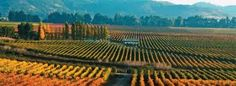 Resultado de imagem para vinícolas no chile