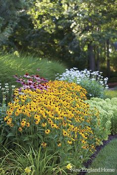 for along both sides of the front porch? echinachea, black-eyed susan, sedum, shasta daisies, and day lilies.