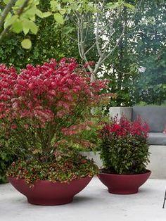 Der Herbst hat viele Seiten. Das zeigt sich auch in der Pflanzenwelt. Der Wechsel der Jahreszeiten ist die Zeit, in der viele wunderschöne Pflanzen zu leuchten beginnen. Ob wir nach Pflanzen suchen, um unseren Eingangsbereich zu verschönern, einen herbstlichen Kranz zu gestalten oder den Garten mit Farbe zu füllen – die Auswahl ist riesig. Wir präsentieren hier eine Auswahl typischer Herbstpflanzen, die wir in der kommenden Saison in vollen Zügen genießen können!