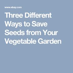 Three Different Ways to Save Seeds from Your Vegetable Garden