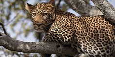Tanzania is a famous destination for wildlife tourism. There are several national parks and wildlife sanctuaries in Tanzania containing various animals. http://ugandasafariholiday.com/