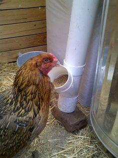 PVC Chicken Feeder