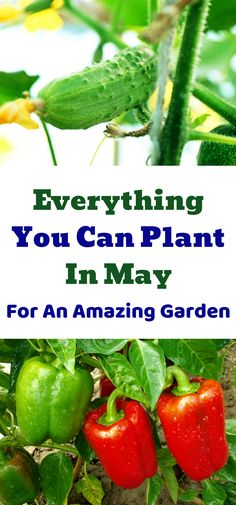 Everything you can plant in the month of May in your garden. Seeds and transplants for vegetables, herbs and fruits for an amazing summer garden.