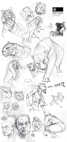 Tiger sketches, biz02 on deviantART