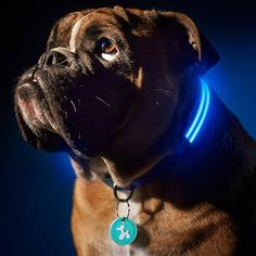 LED Dog Collar - Assorted Colors and Sizes - BoardwalkBuy - 1