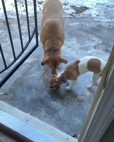 Cute Funny Dogs, Cute Funny Animals, Some Funny Videos, Funny Animal Videos, Dogs And Puppies, Doggies, Thors Hammer, I Love Dogs, Pet Birds