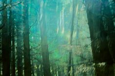 Der Harz 2014. Das Spiel mit Licht und Schatten