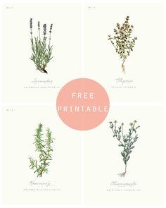 {Déco} Des posters green à imprimer! Botanical Drawings, Botanical Prints, Cuadros Diy, Impressions Botaniques, Illustration Botanique, Foto Poster, Free Prints, Clipart, Oeuvre D'art
